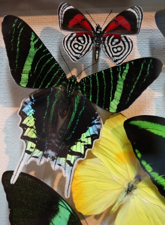 Butterflies in the frame are real tropical butterflies, processed in a special way