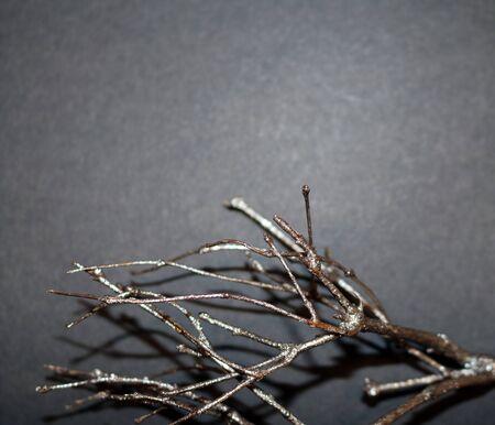 Silver twig on dark gray background