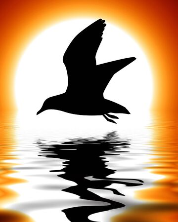 silhouette of a bird in front of a sunset Stock Photo - 3095670