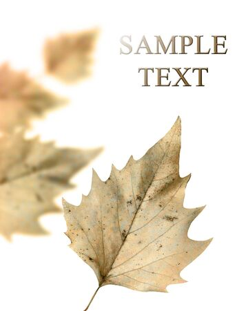 birch leaves with empty space for text Stock Photo - 3718842