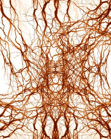 hormon: human nerve system on a solid white background Stock Photo
