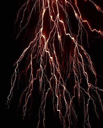 plant roots: plant roots on a solid black background