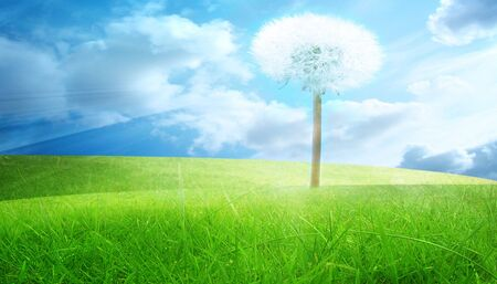 green grass with blue sky and a dandelion photo