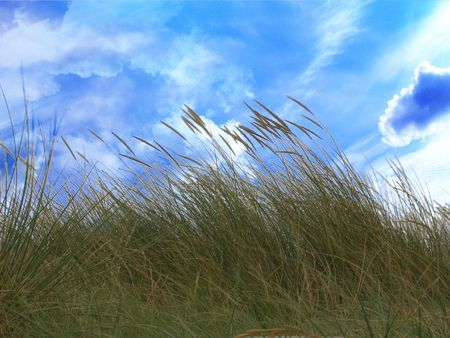 marram grass with a clear blue sky above Stock Photo - 5808895