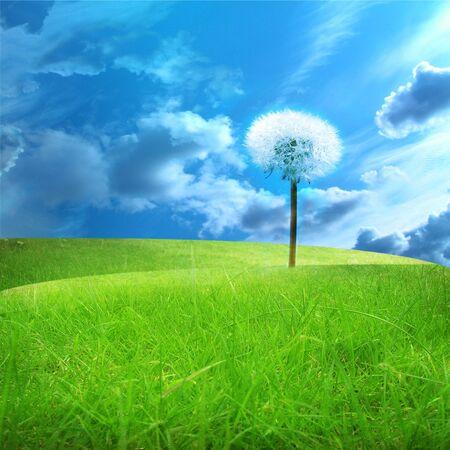 green fields with a dandelion in it photo