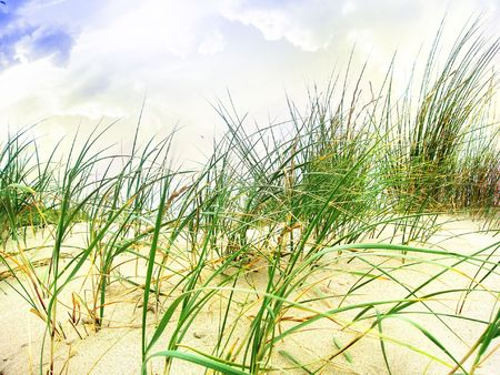marram grass in the sand with clouds above Stock Photo - 5957934