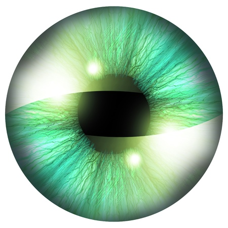 retina scan: Human iris with some highlights and reflections