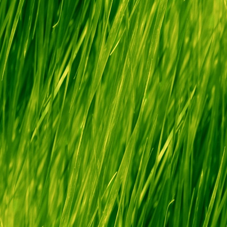 grass background with some highlights and shades on it photo