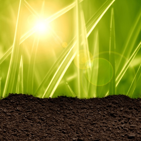 green grass background with a soil texture Stock Photo - 21883985