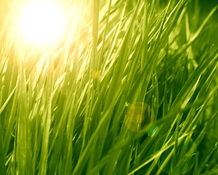 grass background with some highlights and shades on it Stock Photo - 21883991