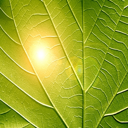 close up of a green leaf with its veins photo