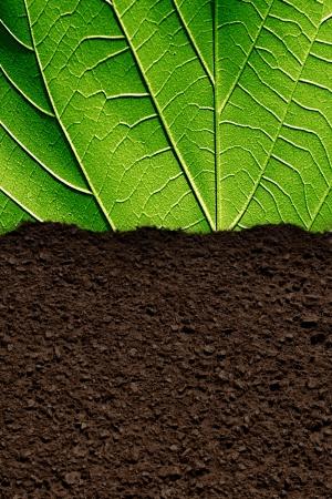 それにいくつかの緑と茶色の土の質の葉します。