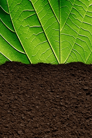 brown soil texture with some green leaves on it Stok Fotoğraf - 22104653