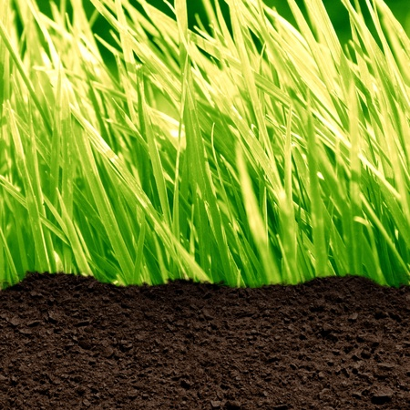 clod: green grass background with a soil texture Stock Photo