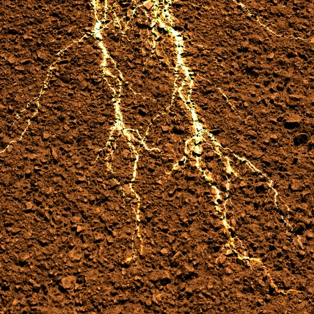 plant roots in a brown soil background photo