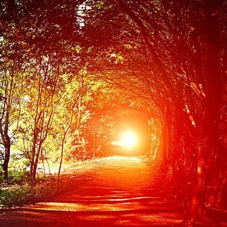 sunset or sunrise in the woods in Belgium