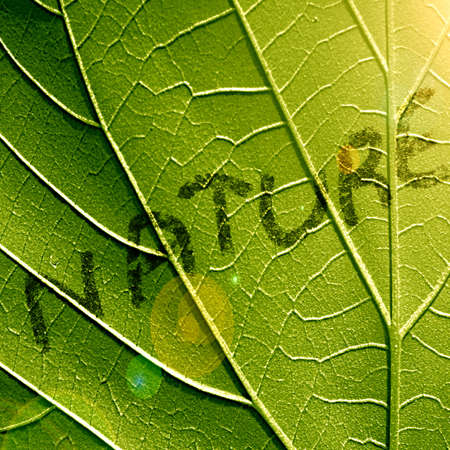 close up of a green leaf with nature written on it photo