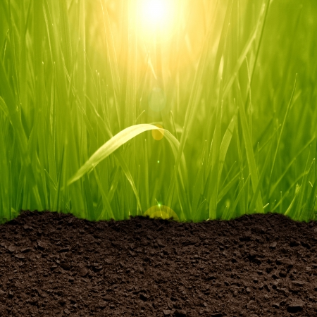 turf: green grass background with a soil texture Stock Photo