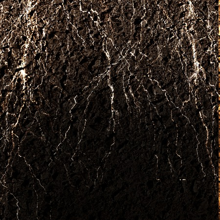 plant roots in a brown soil background Stock Photo