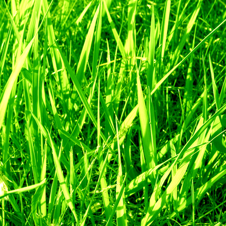 highlights: grass background with some highlights and shades on it Stock Photo