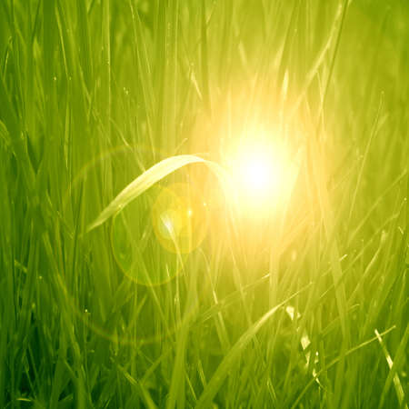 grass background with some highlights and shades on it Stock Photo - 23000015