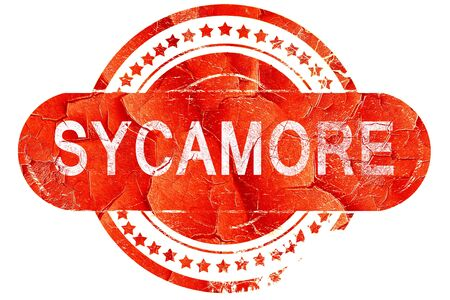 sycamore: sycamore, red grunge rubber stamp on white background
