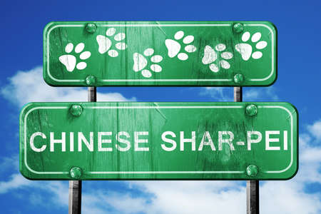sharpei: Chinese shar-pei, 3D rendering, green road sign on blue sky