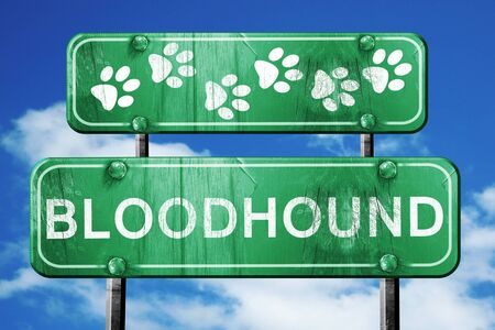 bloodhound: Bloodhound, 3D rendering, green road sign on blue sky Stock Photo