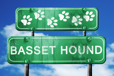 hound: Basset hound, 3D rendering, green road sign on blue sky Stock Photo
