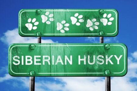 siberian husky: Siberian husky, 3D rendering, green road sign on blue sky Stock Photo