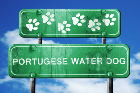 portugese: Portugese water dog, 3D rendering, green road sign on blue sky