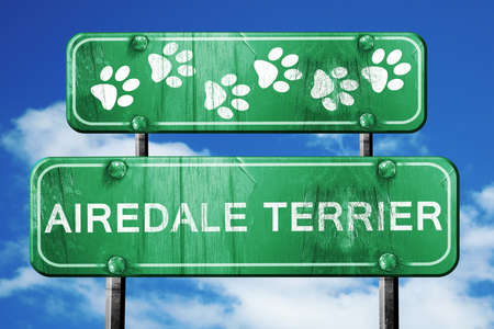 airedale terrier dog: Airedale terrier, 3D rendering, green road sign on blue sky Stock Photo