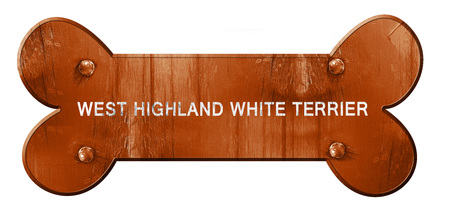 highland: West highland white terrier, 3D rendering, rough brown dog bone Stock Photo