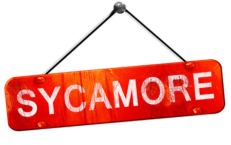 sycamore: sycamore, 3D rendering, a red hanging sign Stock Photo