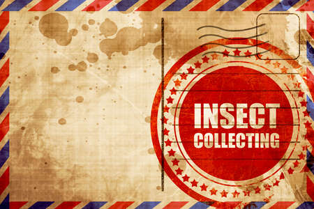 stamp collecting: insect collecting, red grunge stamp on an airmail background