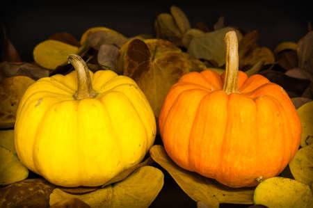 Decoration pumpkin of Halloween photo