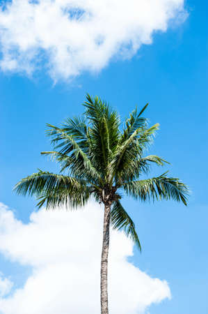 Palm trees and a blue sky photo