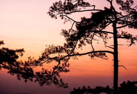 phukradueng: phukradueng national park