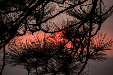 phukradueng: Wild twilight time in Phukradueng National Park