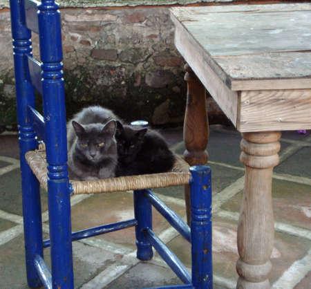 amigos abrazandose: Madre e hijo gatos que abrazan en una silla