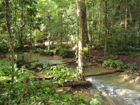 チアパス州, メキシコのラカンドン ジャングルの川
