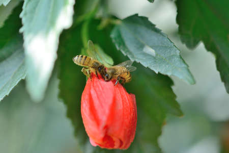 Bees feeding on red flower photo