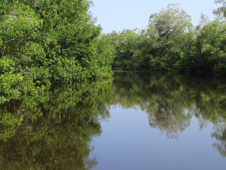 lone tree: Mangrove river in Chiapas, Mexico Stock Photo