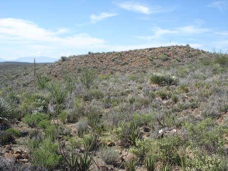 Coahuila desert in Mexico