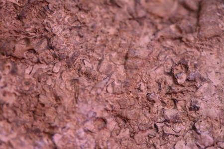 fossil record: Fossil rocks