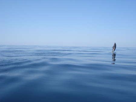 El salto del delfín mular en el mar Foto de archivo