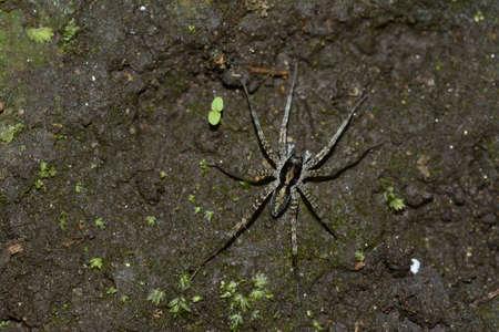 wolf spider: Wolf spider on soil Stock Photo
