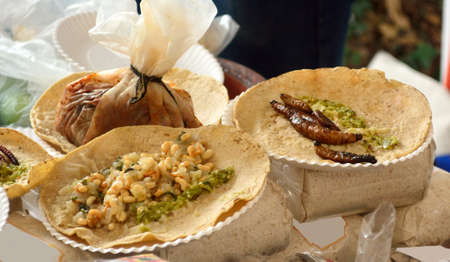 Fried insect and worm tacos from Mexican cuisine: Tacos of  Cucham� worms and escamoles (ant eggs), and rabbit mixiote