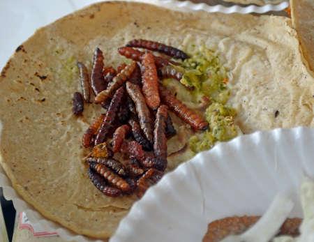 tortilla de maiz: Taco de gusanos fritos de Cuchamá (Paradirphia fumosa) comida étnica mexicana Foto de archivo