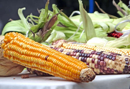 Mexican corn diversity: yellow and hybrid corn